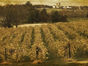 Wine Country     DWP©12